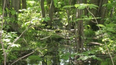 Photo of Pour l'avenir des milieux naturels et de la diversité à Longueuil